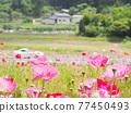 花朵 花 花卉 77450493