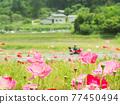 花朵 花 花卉 77450494