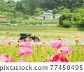 花朵 花 花卉 77450495