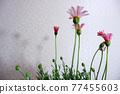 花朵 花 花卉 77455603