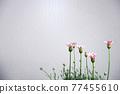 花朵 花 花卉 77455610