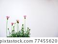 花朵 花 花卉 77455620