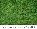 Top view of green grass texture background Idea concept used for making green backdrop. 77455830