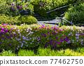 愛麗思花園 花菖蒲 花朵 77462750