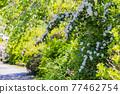 花菖蒲 花朵 花 77462754