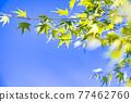 花菖蒲 花朵 花 77462760
