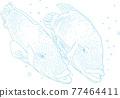 畫線 魚 游泳 77464411