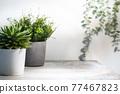 Home plant in gray concrete pot 77467823
