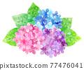 繡球花 花朵 花 77476041