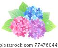 繡球花 花朵 花 77476044