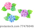 繡球花 花朵 花 77476046
