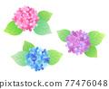 繡球花 花朵 花 77476048