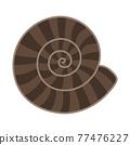 菊石的化石 77476227