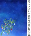 夜空 星星 星 77477556