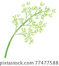 竹草 77477588