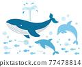 鯨魚 海豚 矢量 77478814