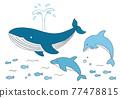 鯨魚 海豚 矢量 77478815