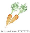 胡蘿蔔 紅蘿蔔 一根胡蘿蔔 77479793