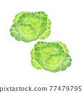 甘藍 包菜 椰菜 77479795