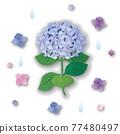 矢量 繡球花 花朵 77480497