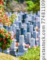 通過鮮綠色的樹枝和樹葉看到的公墓風光 77481109