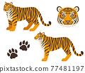 老虎 虎 動物 77481197