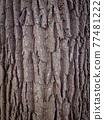Tree bark texture 77481222