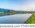 azumino, paddy, spring 77481909