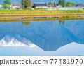 azumino, paddy, spring 77481970