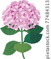 矢量 繡球花 花朵 77484313