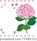 矢量 繡球花 花朵 77485152