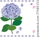 矢量 繡球花 花朵 77485153