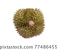 Green durian, a close up of Thai tropical smelly fruit food isolated on white background. 77486455