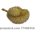 Green durian, a close up of Thai tropical smelly fruit food isolated on white background. 77486456