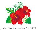 hibiscus, vector, vectors 77487311