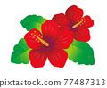 hibiscus, vector, vectors 77487313