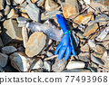 Blue Medical Glove Lying on the pebble beach in Ireland 77493968