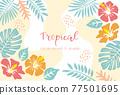 蓬萊蕉 熱帶 葉子 77501695
