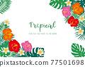 熱帶 葉子 葉 77501698