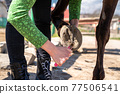 cleaning the hooves of the horse with a brush and a hook 77506541