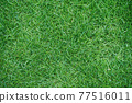 Top view of green grass texture background Idea concept used for making green backdrop. 77516011