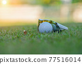 The golf ball is on the golf green, the background is blurred with the sunglasses and there is a tee placed next to it. 77516014