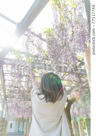 Wisteria tree and the back of a woman 77517769