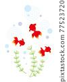 金魚和水生植物 77523720
