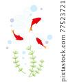 金魚和水生植物 77523721