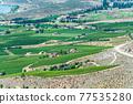 Farm lands landscape in Okanagan valley on summer day. 77535280
