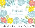 蓬萊蕉 熱帶 葉子 77535570