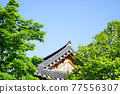 tree, Hanok, tiled roof 77556307