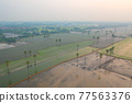 Aerial view of Dong Tan trees in green rice field in national park at sunset in Sam Khok district in rural area, Pathum Thani, Thailand. Nature landscape tourist attraction in travel trip concept. 77563376