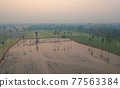Aerial view of Dong Tan trees in green rice field in national park at sunset in Sam Khok district in rural area, Pathum Thani, Thailand. Nature landscape tourist attraction in travel trip concept. 77563384